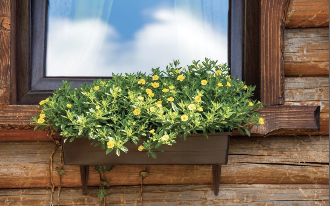 What You Need to Know About Garden Windows